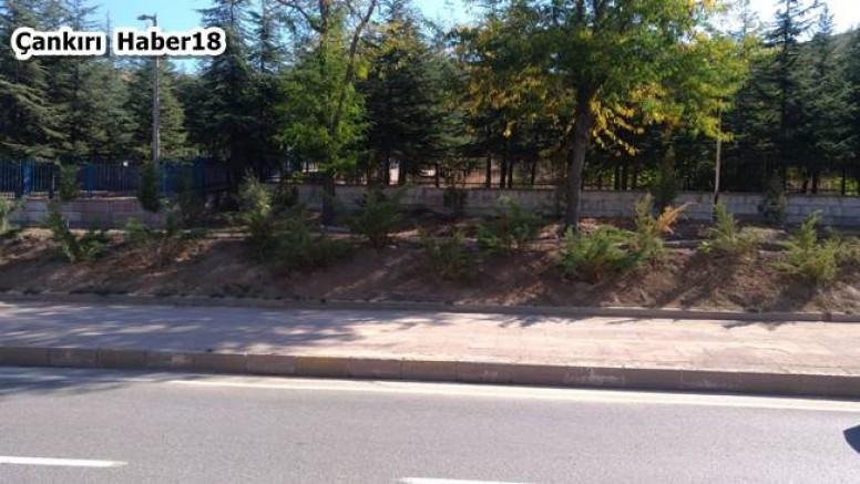 320 Adet Ardıç Bitkisi Dikildi - Belediye Haberleri - Çankırı - haber18