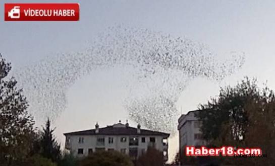 Çankırı Merkezde Kuşların Dansı Genel haberler - Çankırı