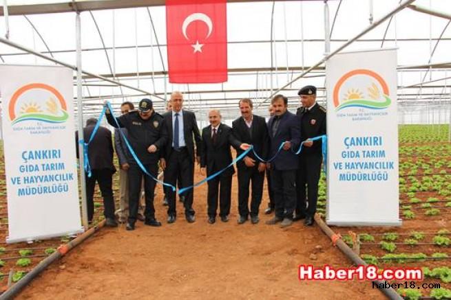 Çankırı'nın En Büyük İkinci Serasının Açılışını Gerçekleştirdiler İl Tarım ve Orman Müdürlüğü - Çankırı