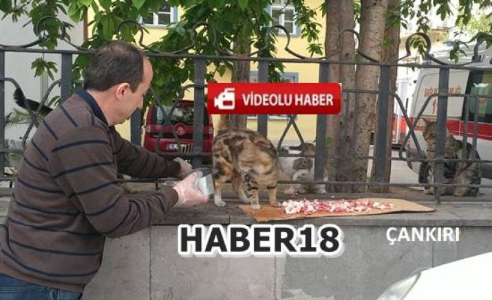 Çankırılı Esnaf Aktürk İftara dakikalar kala sokak kedilerini doyurdu - Çankırı Genel Haber Haber18 - attorney at law ,boat yacht  wealth luxury