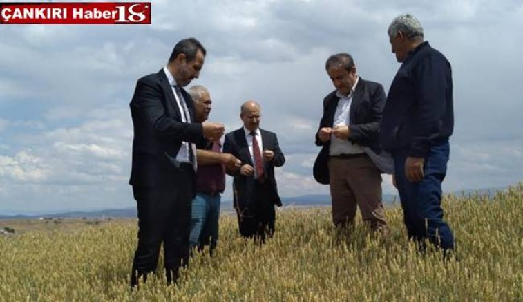 Milletvekili Salim Çivitçioğlu,Tarım Müdürlüğü yetkilileri ile arazide inceleme yaptı - Çankırı Kurumlar Haber18 - attorney at law ,boat yacht  wealth luxury