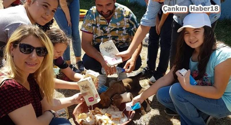 Fatih Sultan Mehmet Çocuk Akademisi, öğrencileri için hayvan barınağı gezisi düzenledi - Çankırı Belediye Haber18 - attorney at law ,boat yacht  wealth luxury