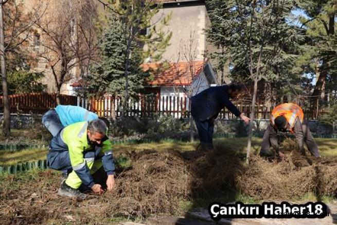 Çankırı - Şehir Merkezinde Budama Çalışmaları Başladı - Çankırı Belediyesi haber18 haberleri