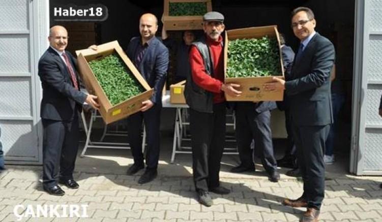Seralarda İlkbahar Sebze Üretimi Sezonu Açıldı Kurumlar - Çankırı