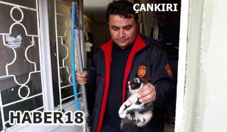Sıkışan Kedi Yavrusunu  Kurtardılar Çankırı Belediyesi - Çankırı