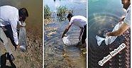 Çankırı - haber18 - İlimizde  İçsular balıklandırıldı - İl Tarım ve Orman Müdürlüğü