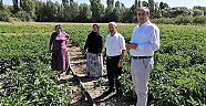 Çankırı - haber18 - Çankırı'da Malçlı Sebze Üretimi Yaygınlaşıyor - İl Tarım ve Orman Müdürlüğü