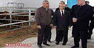 Çankırı - haber18 - Vali Aktaş, Kurşunlu'daki Besi Çiftliği ve Süt Tesisinde İncelemelerde Bulundu - Kurşunlu Haberleri