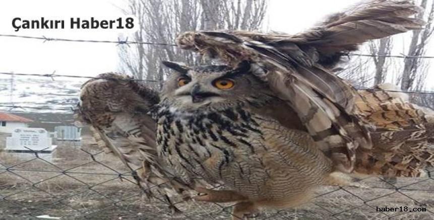 Tele Takılı Kalan Baykuşu İtfaiye Ekipleri Kurtardı